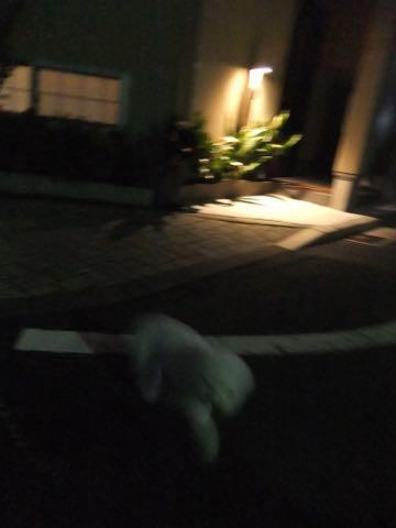 トイ・プードルペットホテル様子おさんぽ犬おあずかり文京区フントヒュッテ東京トイプードルトリミング画像都内ペットホテル駒込_131.jpg