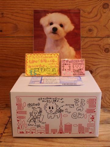 ビションフリーゼ子犬フントヒュッテこいぬ家族募集里親関東_3349.jpg