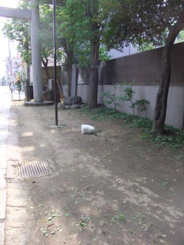 ビションフリーゼフントヒュッテこいぬ画像ビションフリーゼ子犬社会化性格血統チャンピオン犬東京ビションメス関東かわいいビションおとこのこ文京区出産情報ビション募集_299.jpg