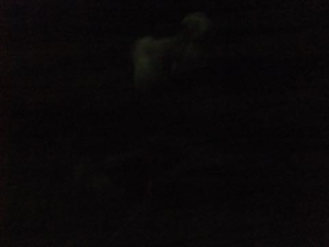 トイ・プードル極小サイズティーカッププードル東京トイプードルトリミング画像フントヒュッテ駒込ビションフリーゼトリミング文京区ペットホテル都内_202.jpg
