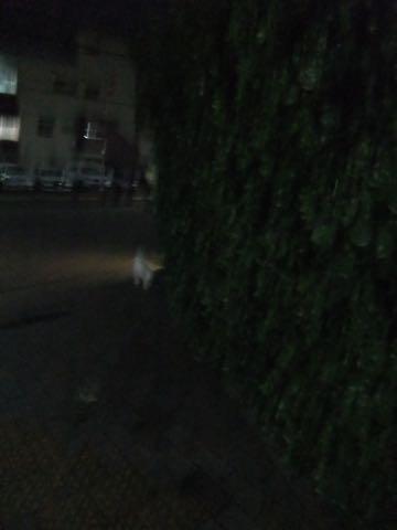 トイ・プードル極小サイズティーカッププードル東京トイプードルトリミング画像フントヒュッテ駒込ビションフリーゼトリミング文京区ペットホテル都内_206.jpg