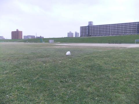 ビションフリーゼフントヒュッテこいぬ画像ビションフリーゼ子犬社会化性格血統チャンピオン犬東京ビションメス関東かわいいビションおとこのこ文京区出産情報ビション募集_530.jpg