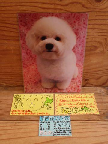 ビションフリーゼ子犬フントヒュッテこいぬ家族募集里親関東_3351.jpg