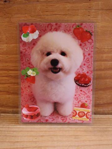 ビションフリーゼ子犬フントヒュッテこいぬ家族募集里親関東_3352.jpg