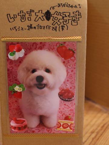 ビションフリーゼ子犬フントヒュッテこいぬ家族募集里親関東_3356.jpg