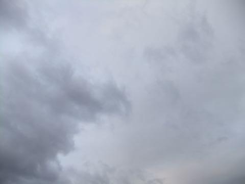 ビションフリーゼフントヒュッテこいぬ画像ビションフリーゼ子犬社会化性格血統チャンピオン犬東京ビションメス関東かわいいビションおとこのこ文京区出産情報ビション募集_786.jpg