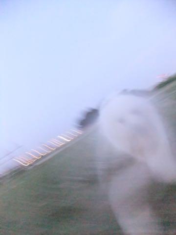 ビションフリーゼフントヒュッテこいぬ画像ビションフリーゼ子犬社会化性格血統チャンピオン犬東京ビションメス関東かわいいビションおとこのこ文京区出産情報ビション募集_861.jpg