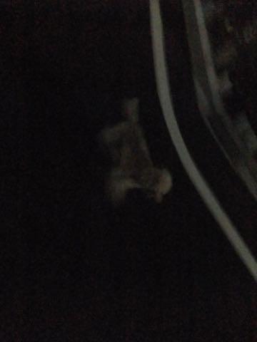 トイ・プードルトリミング文京区トイプードルテディベアカット都内トリミングサロン東京フントヒュッテ駒込トイプーカットスタイルテディベアカット画像_39.jpg
