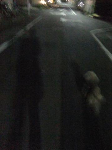 トイ・プードルトリミング文京区トイプードルテディベアカット都内トリミングサロン東京フントヒュッテ駒込トイプーカットスタイルテディベアカット画像_87.jpg