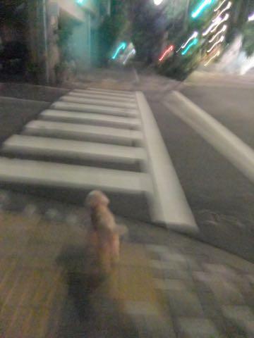 トイ・プードルトリミング文京区トイプードルテディベアカット都内トリミングサロン東京フントヒュッテ駒込トイプーカットスタイルテディベアカット画像_93.jpg