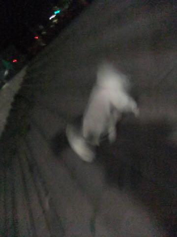 トイ・プードル極小サイズティーカッププードル東京トイプードルトリミング画像フントヒュッテ駒込ビションフリーゼトリミング文京区ペットホテル都内_265.jpg