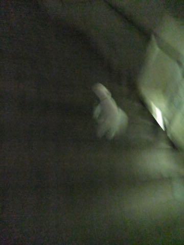 トイ・プードル極小サイズティーカッププードル東京トイプードルトリミング画像フントヒュッテ駒込ビションフリーゼトリミング文京区ペットホテル都内_271.jpg
