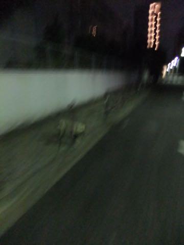パグトリミング画像フントヒュッテ文京区ペットホテル様子おさんぽ犬おあずかり東京パグ夏短頭種とは鼻ぺちゃ犬パグ性格特徴色Pug_123.jpg