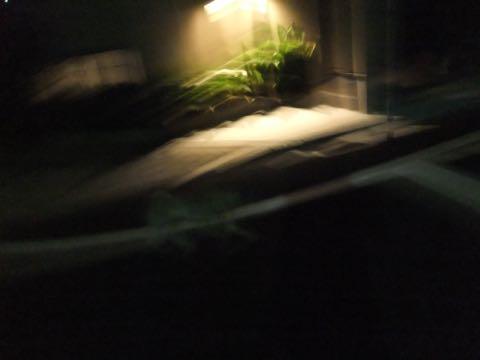 パグトリミング画像フントヒュッテ文京区ペットホテル様子おさんぽ犬おあずかり東京パグ夏短頭種とは鼻ぺちゃ犬パグ性格特徴色Pug_125.jpg