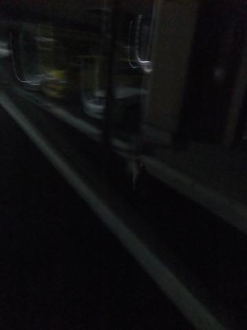 パグトリミング画像フントヒュッテ文京区ペットホテル様子おさんぽ犬おあずかり東京パグ夏短頭種とは鼻ぺちゃ犬パグ性格特徴色Pug_126.jpg