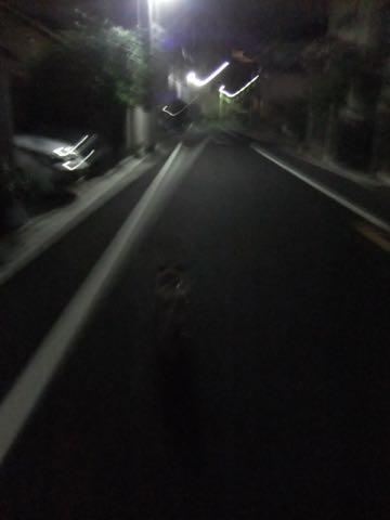パグトリミング画像フントヒュッテ文京区ペットホテル様子おさんぽ犬おあずかり東京パグ夏短頭種とは鼻ぺちゃ犬パグ性格特徴色Pug_128.jpg