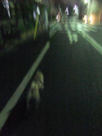 パグトリミング画像フントヒュッテ文京区ペットホテル様子おさんぽ犬おあずかり東京パグ夏短頭種とは鼻ぺちゃ犬パグ性格特徴色Pug_149.jpg