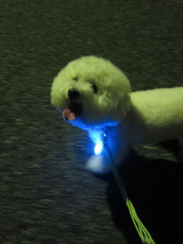NITE IZE SPOTLIT LED ナイトアイズ スポットライト スポットリット NITE IZE 犬用LEDカラー NITE IZE PETLIT LED ペットリット 交換用リチウム電池 犬 おさんぽ 夜 ライト_4.jpg