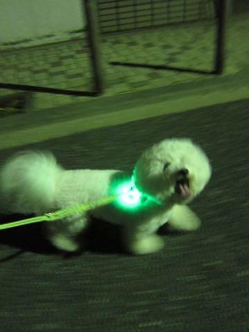 NITE IZE SPOTLIT LED ナイトアイズ スポットライト スポットリット NITE IZE 犬用LEDカラー NITE IZE PETLIT LED ペットリット 交換用リチウム電池 犬 おさんぽ 夜 ライト_5.jpg