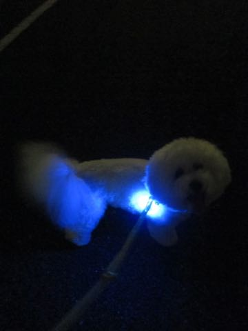 NITE IZE SPOTLIT LED ナイトアイズ スポットライト スポットリット NITE IZE 犬用LEDカラー NITE IZE PETLIT LED ペットリット 交換用リチウム電池 犬 おさんぽ 夜 ライト_7.jpg