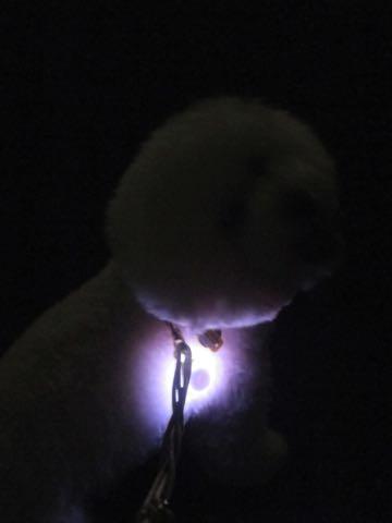 NITE IZE SPOTLIT LED ナイトアイズ スポットライト スポットリット NITE IZE 犬用LEDカラー NITE IZE PETLIT LED ペットリット 交換用リチウム電池 犬 おさんぽ 夜 ライト_8.jpg