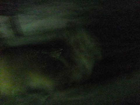 チワワトリミング文京区フントヒュッテチワワサマーカット画像ペットホテル東京ドッグホテル様子おさんぽ犬ホテル料金hundehutte駒込_106.jpg