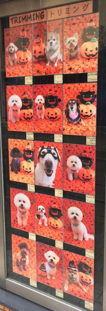 ハロウィン 生地 かぼちゃ 画像 USA生地 柄 種類 ファブリック 写真撮影 背景 トリミングサロン フントヒュッテ ストアディスプレイ 飾り 飾り付け やり方 HAPPY HALLOWEEN 2017_9.jpg
