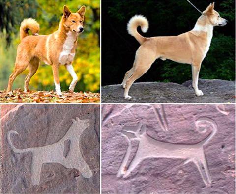 8000年以上、仲良いワン 最古の「飼い犬」の壁画?発見_2