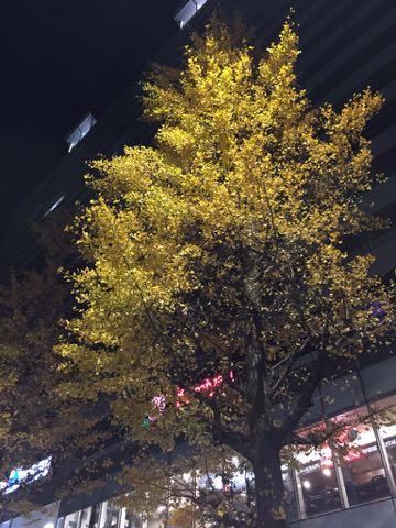 イチョウいちょう銀杏秋落葉イチョウ並木イチョウの葉黄色イチョウの木オスメス銀杏臭いにおいクサイ落ち葉の絨毯落葉掃除いちょう画像2017_1