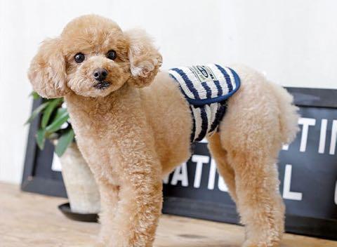 マナーベルトポンポリース犬オスマーキング防止マナーおしっこひっかけ防止ベルトはらまきペットグッズ東京フントヒュッテ文京区_4