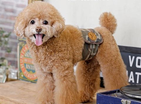 マナーベルトポンポリース犬オスマーキング防止マナーおしっこひっかけ防止ベルトはらまきペットグッズ東京フントヒュッテ文京区_9