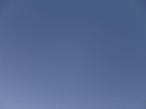 ビションフリーゼこいぬ情報フントヒュッテビションこいぬ画像子犬の社会化ビション赤ちゃんおんなのこかわいいビションフリーゼおとこのこ東京ビション出産情報性格ビション家族募集中_602