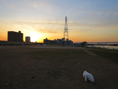 ビションフリーゼこいぬ情報フントヒュッテビションこいぬ画像子犬の社会化ビション赤ちゃんおんなのこかわいいビションフリーゼおとこのこ東京ビション出産情報性格ビション家族募集中_638