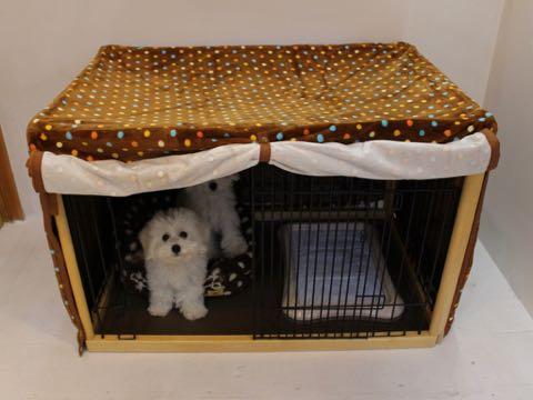 ビションフリーゼこいぬ情報フントヒュッテビションこいぬ画像子犬の社会化ビション赤ちゃんおんなのこかわいいビションフリーゼおとこのこ東京ビション出産情報性格ビション家族募集中_668