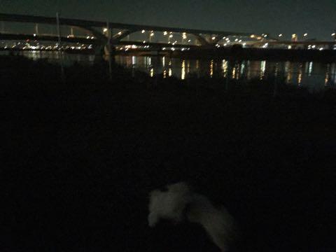 ビションフリーゼこいぬ情報フントヒュッテビションこいぬ画像子犬の社会化ビション赤ちゃんおんなのこかわいいビションフリーゼおとこのこ東京ビション出産情報性格ビション家族募集中_675