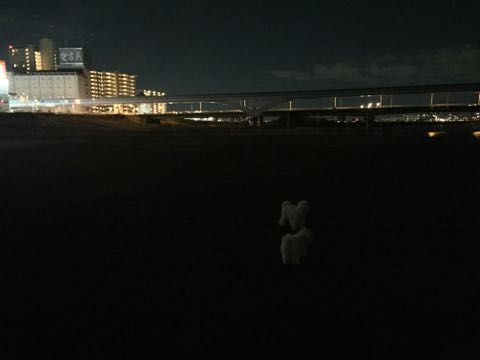 ビションフリーゼこいぬ情報フントヒュッテビションこいぬ画像子犬の社会化ビション赤ちゃんおんなのこかわいいビションフリーゼおとこのこ東京ビション出産情報性格ビション家族募集中_735