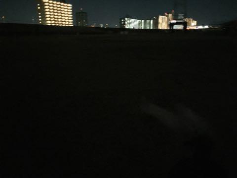 ビションフリーゼこいぬ情報フントヒュッテビションこいぬ画像子犬の社会化ビション赤ちゃんおんなのこかわいいビションフリーゼおとこのこ東京ビション出産情報性格ビション家族募集中_817