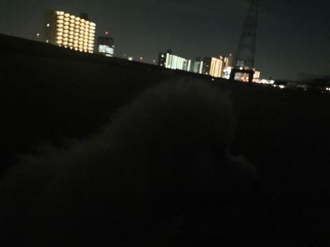ビションフリーゼこいぬ情報フントヒュッテビションこいぬ画像子犬の社会化ビション赤ちゃんおんなのこかわいいビションフリーゼおとこのこ東京ビション出産情報性格ビション家族募集中_892