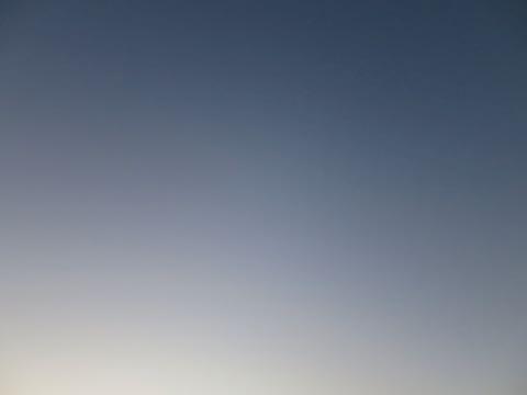 ビションフリーゼこいぬ情報フントヒュッテビションこいぬ画像子犬の社会化ビション赤ちゃんおんなのこかわいいビションフリーゼおとこのこ東京ビション出産情報性格ビション家族募集中_994