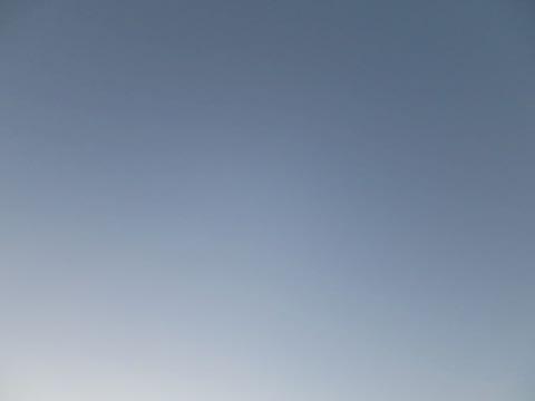 ビションフリーゼこいぬ情報フントヒュッテビションこいぬ画像子犬の社会化ビション赤ちゃんおんなのこかわいいビションフリーゼおとこのこ東京ビション出産情報性格ビション家族募集中_995
