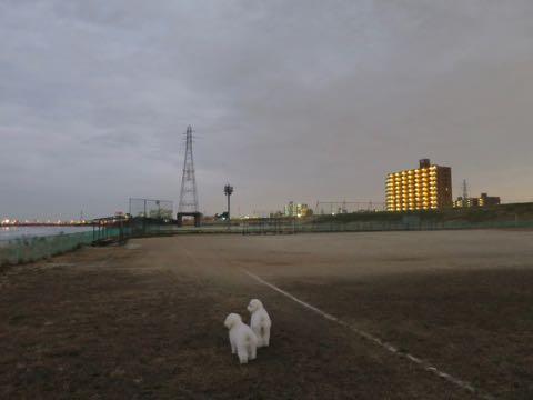 ビションフリーゼこいぬ情報フントヒュッテビションこいぬ画像子犬の社会化ビション赤ちゃんおんなのこかわいいビションフリーゼおとこのこ東京ビション出産情報性格ビション家族募集中_1038