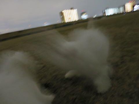 ビションフリーゼこいぬ情報フントヒュッテビションこいぬ画像子犬の社会化ビション赤ちゃんおんなのこかわいいビションフリーゼおとこのこ東京ビション出産情報性格ビション家族募集中_1057