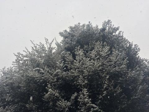 雪 東京 大雪 2018 画像 東京都心で積雪20センチ超 2018年1月22日 2018/1/22 1
