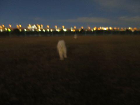 ビションフリーゼこいぬ情報フントヒュッテビションこいぬ画像子犬の社会化ビション赤ちゃんおんなのこかわいいビションフリーゼおとこのこ東京ビション出産情報性格ビション家族募集中_1217