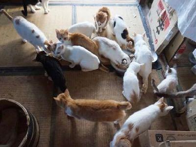 多頭飼育崩壊から救出された猫 デレデレ甘え上手、お店の人気者に 猫 スイくん Oui Oui ウイウイ フランスワイン ワイン酒場 2