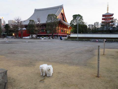 ビションフリーゼこいぬ情報フントヒュッテビションこいぬ画像子犬の社会化ビション赤ちゃんおんなのこかわいいビションフリーゼおとこのこ東京ビション出産情報性格ビション家族募集中_1328