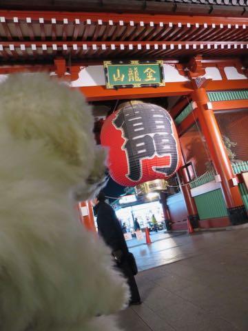 ビションフリーゼこいぬ情報フントヒュッテビションこいぬ画像子犬の社会化ビション赤ちゃんおんなのこかわいいビションフリーゼおとこのこ東京ビション出産情報性格ビション家族募集中_1341
