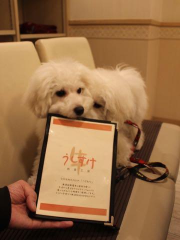 ビションフリーゼこいぬ情報フントヒュッテビションこいぬ画像子犬の社会化ビション赤ちゃんおんなのこかわいいビションフリーゼおとこのこ東京ビション出産情報性格ビション家族募集中_1553