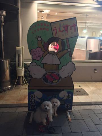 ビションフリーゼこいぬ情報フントヒュッテビションこいぬ画像子犬の社会化ビション赤ちゃんおんなのこかわいいビションフリーゼおとこのこ東京ビション出産情報性格ビション家族募集中_1607