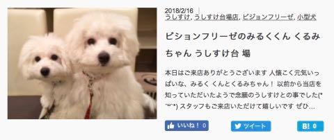 ビションフリーゼこいぬ情報フントヒュッテビションこいぬ画像子犬の社会化ビション赤ちゃんおんなのこかわいいビションフリーゼおとこのこ東京ビション出産情報性格ビション家族募集中_1609